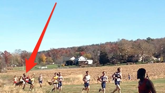 Cervo investe un runner durante una gara