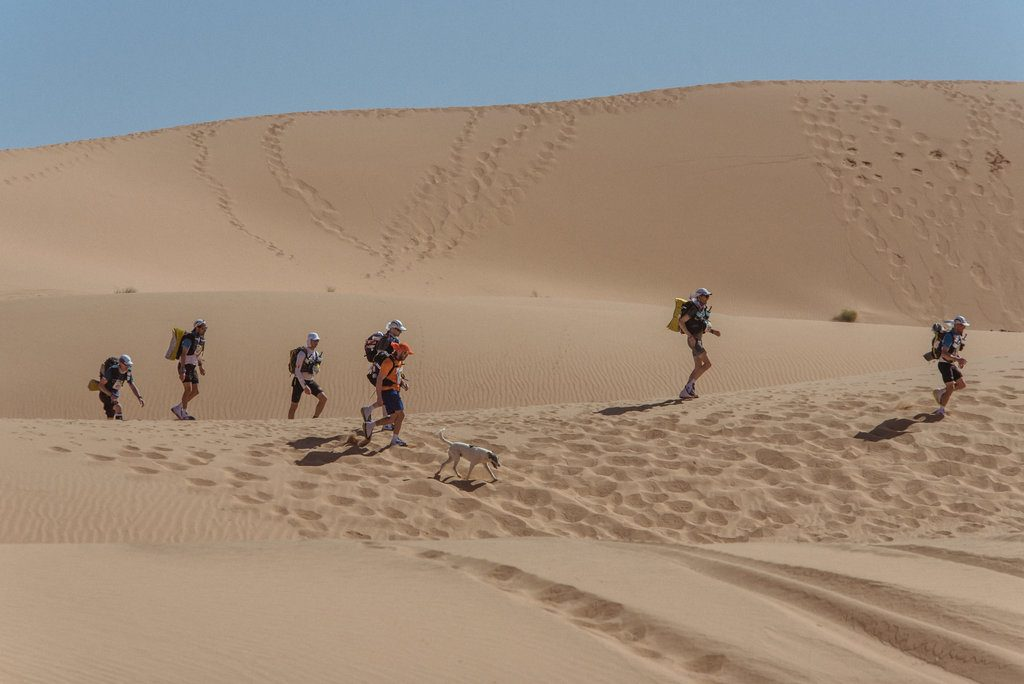 """È un cane è il  """"dominatore"""" della Marathon des Sables nel deserto del Marocco"""