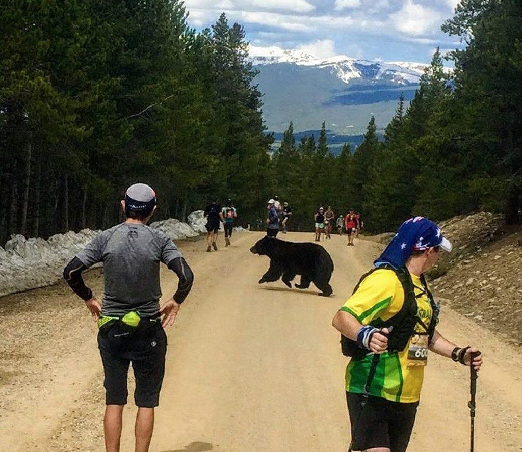 Shock nella maratona, un orso attraversa la strada ai runners sbigottiti