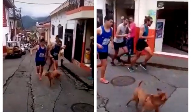 Runner prende a calci un cane durante una gara e perde lo sponsor