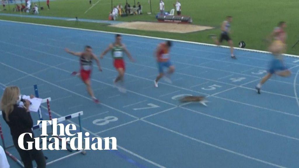 Un gatto sfreccia sul traguardo durante la gara dei 100 metri in Turchia - IL VIDEO