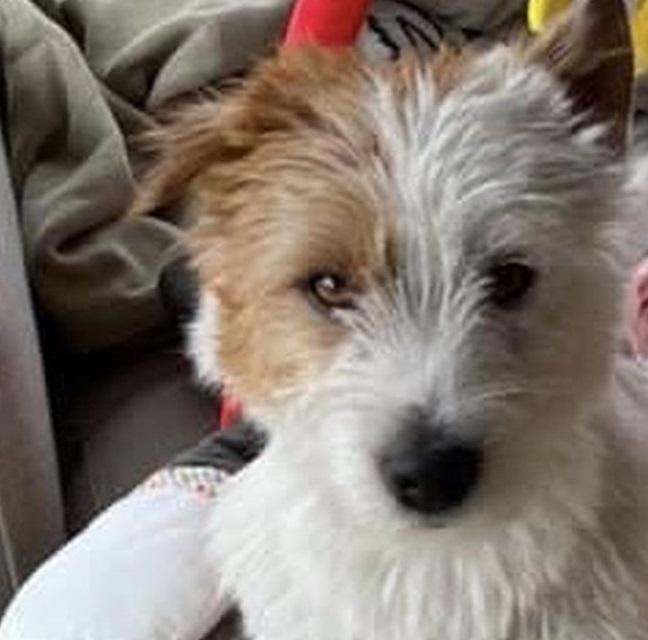 Runner belga uccide un cane con una coltellata mentre gli correva intorno senza guinzaglio