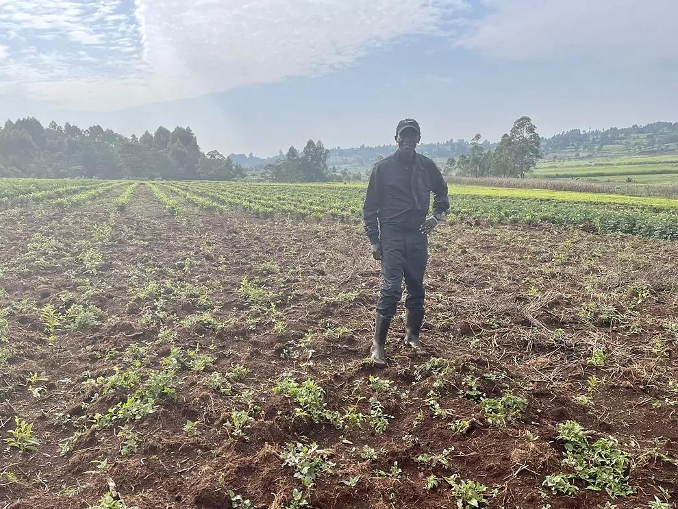 Kipchoge, il contadino che coltiva il tè-quando non corre